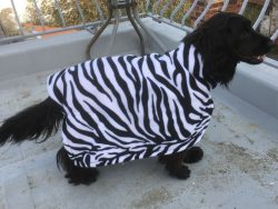 Zebra Bone Dry® Robe